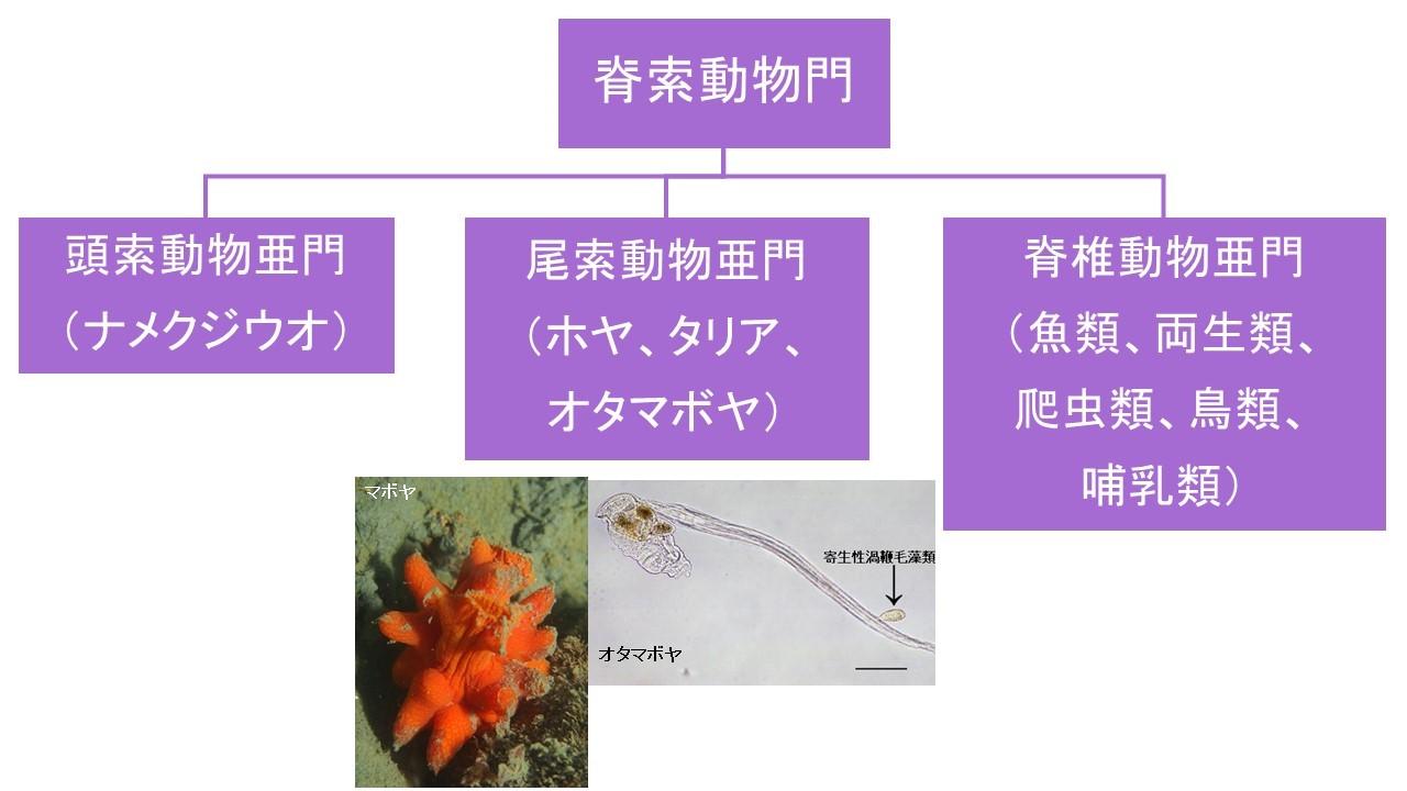 学術用語の解説(無脊椎動物編)...